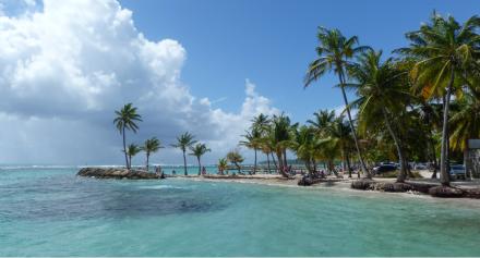 Palmen auf Bahamas - Bild: korsakoff